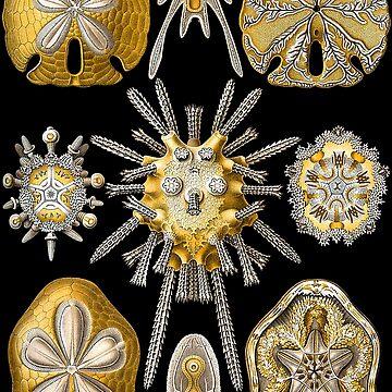 Macro Sea Creatures Sea Urchins by JoolyA