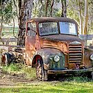 Old Timer 2  by Pauline Tims