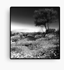 Outback ... Western Australia Canvas Print
