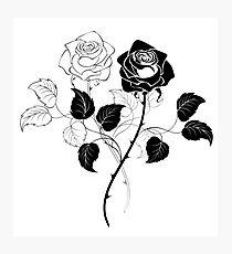 Two Roses ( Black and White ) Photographic Print