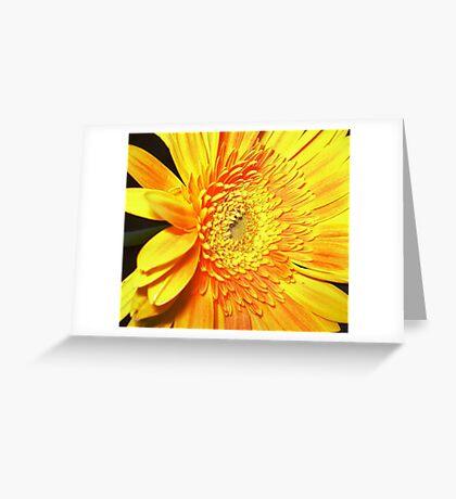 Gold & Beautiful Gerbera Greeting Card