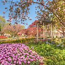 Tulip Time in Bowral by Michael Matthews