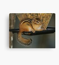 little theif Canvas Print