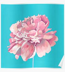 Pink Peony in Teal Poster