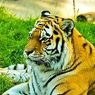 Eye of the Tiger by Stuart  Milton