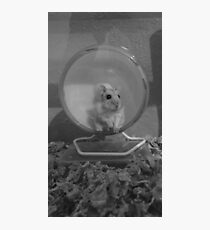 a hamster named eggs Photographic Print