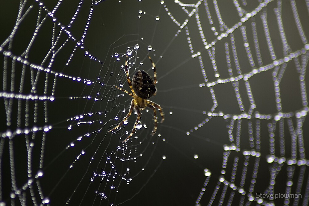 The spider in his web by Steve plowman