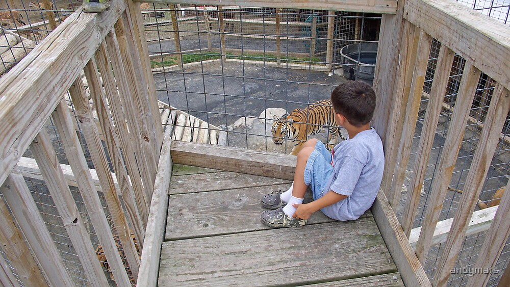 Boy looking at Tiger by andymars