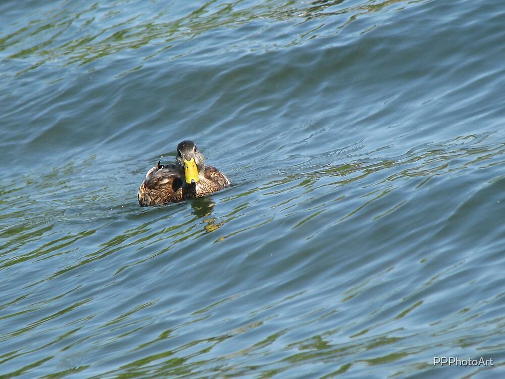 Duckie by PPPhotoArt