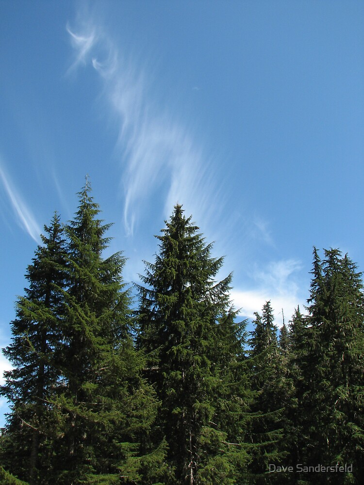 Trees and Clouds by Dave Sandersfeld