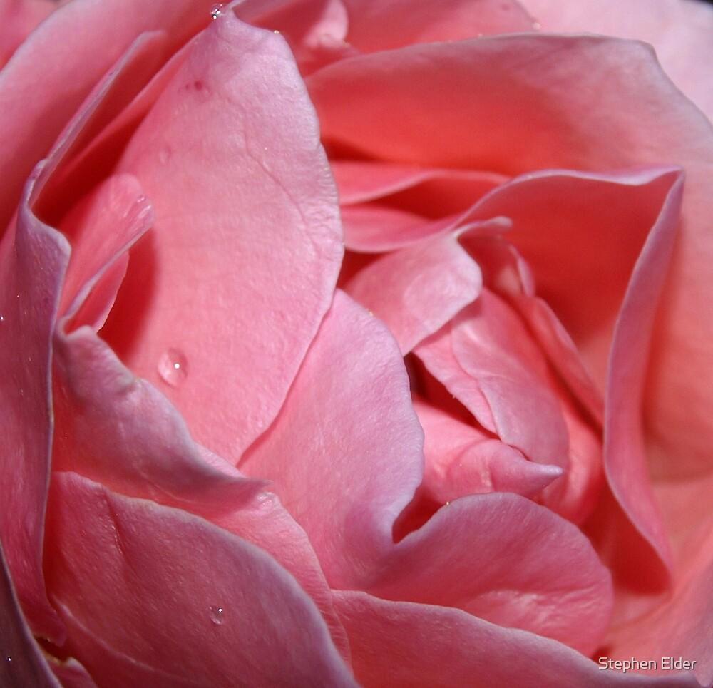 Rose heart closeup by Stephen Elder