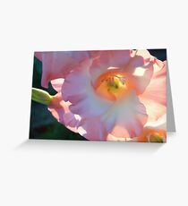 Sword lily Greeting Card