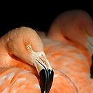 The Flamingo Line by Sue  Cullumber