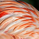 Pink Plumes by Sue  Cullumber