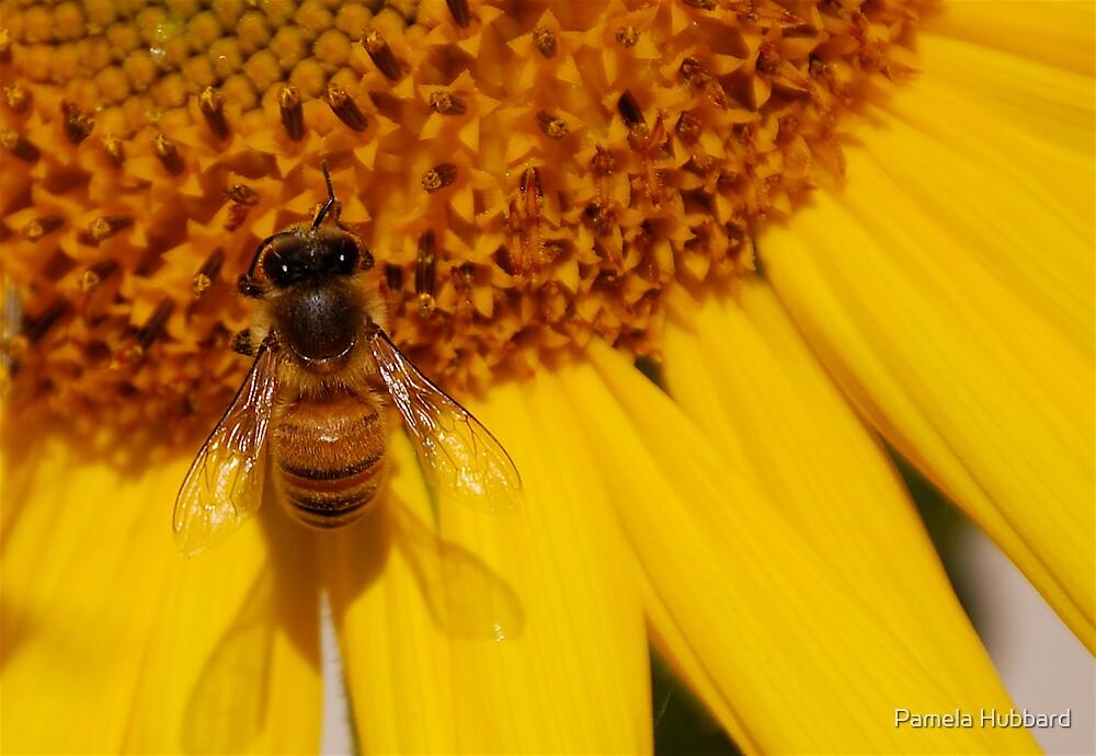 Bee Happy by Pamela Hubbard