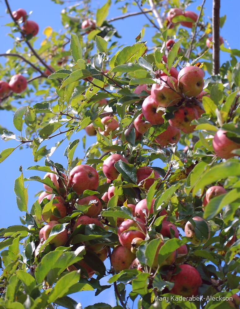Apples by Mary Kaderabek-Aleckson
