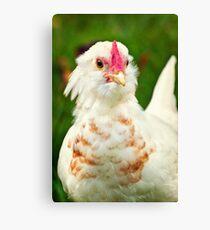 White Barbu d'Uccle bantam chicken Canvas Print