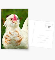White Barbu d'Uccle bantam chicken Postcards