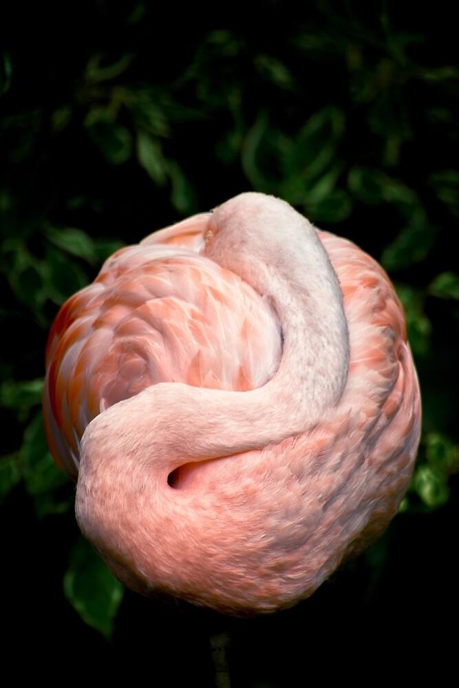 Flamingo Dreams by Vicki Field
