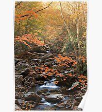 Nature's Splendor  Poster