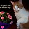 A Valentine Card with a Cat
