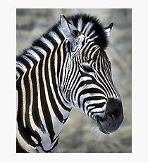 Zebra Lovers Art Gifts Photographic Print