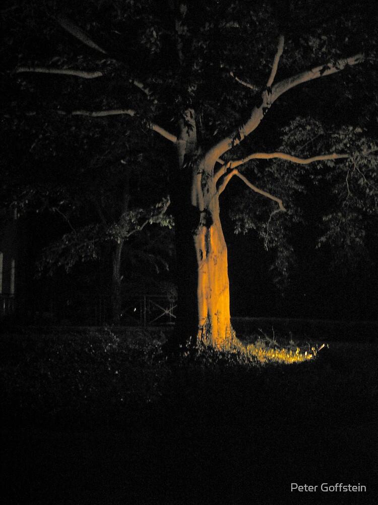 Dark In Bloom by Peter Goffstein