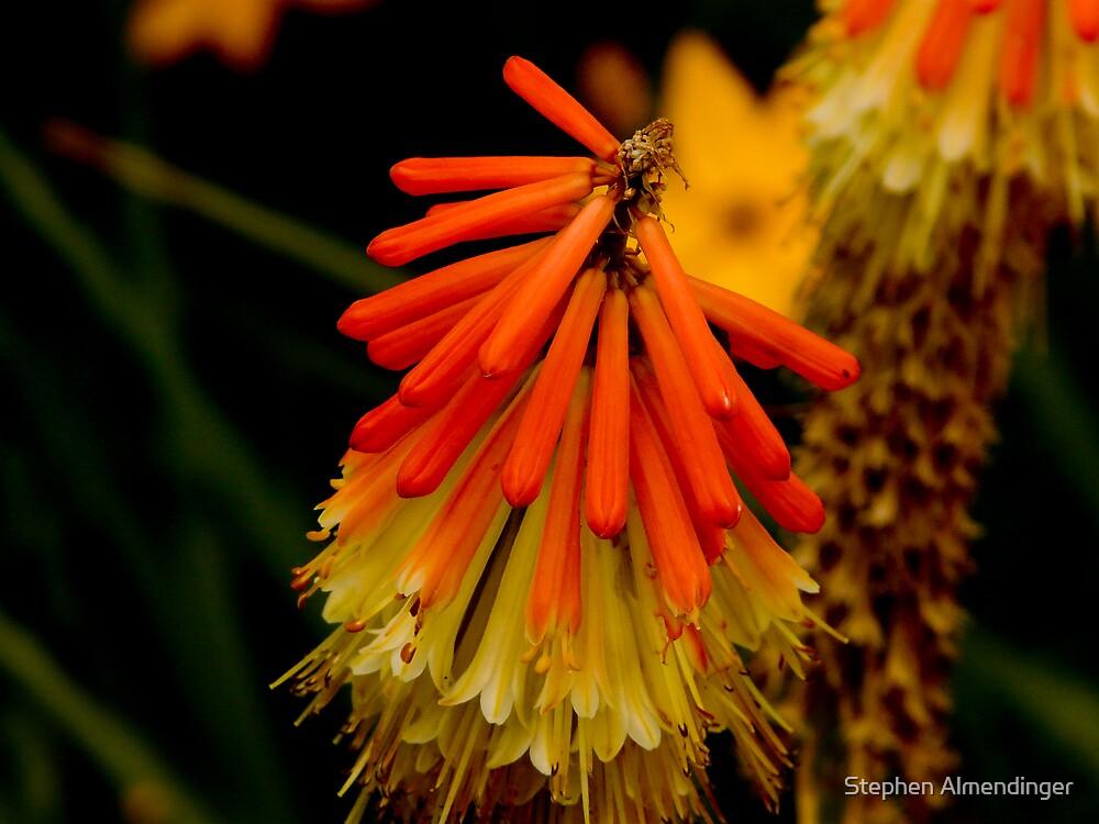 Unique Flower by Stephen Almendinger
