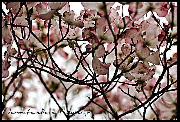 Spring by JenniferRose Photography