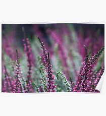 Purple meadow flowers background Poster