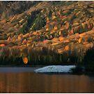 Sunlight on Woodstock Beaver Pond by Wayne King