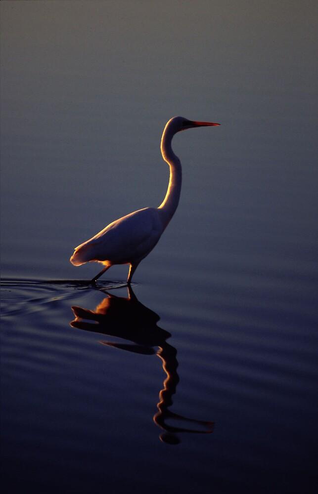 Egret by John Brumfield