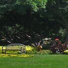 Parkscape by psphotogallery