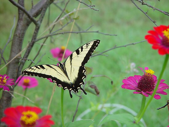 Butterfly flying away - photo#35