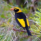Regent Bower Bird, Lamington National Park, Australia by Richard  Windeyer