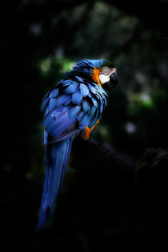 Feathers Blue by apriljd