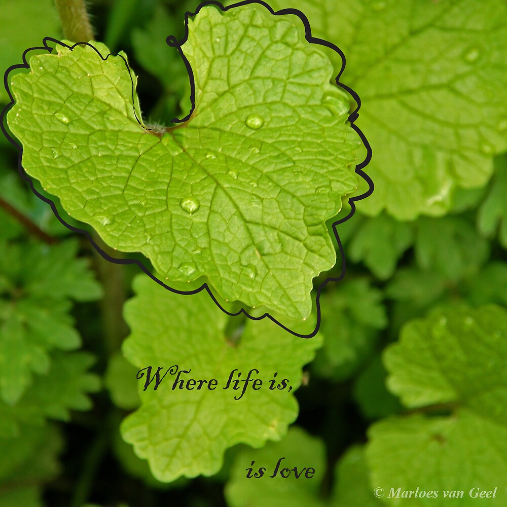 Where life is by Mloes