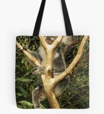 Phascolarctos cinereus - Koala Bear Tote Bag