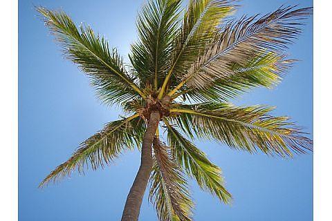 Palm I by lschreib