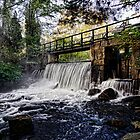 The Dam - Stevens Brook by T.J. Martin