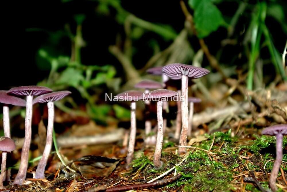 Mushrooms by Nasibu Mwande