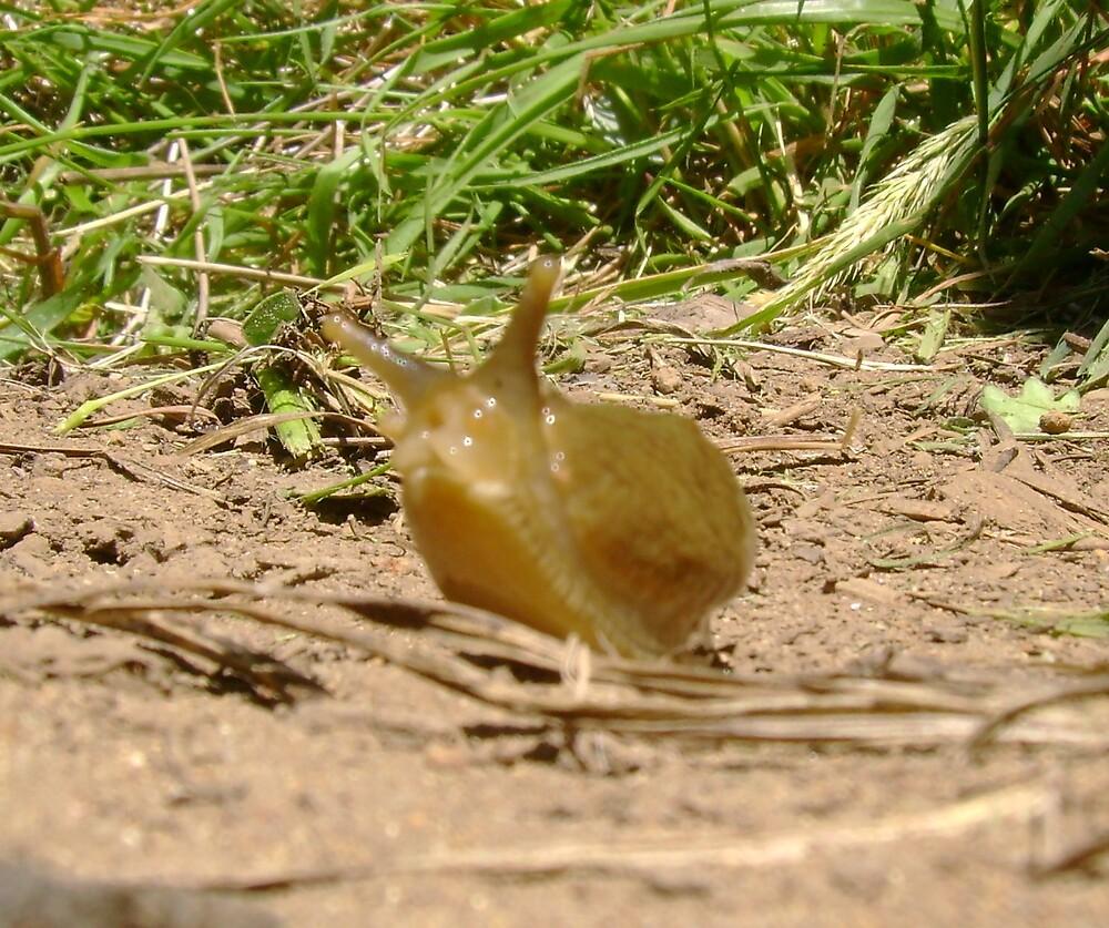 Slug by Sheri Scherbarth