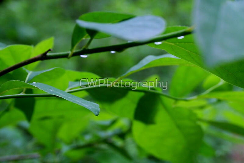 Do the Dew by CWPhotography