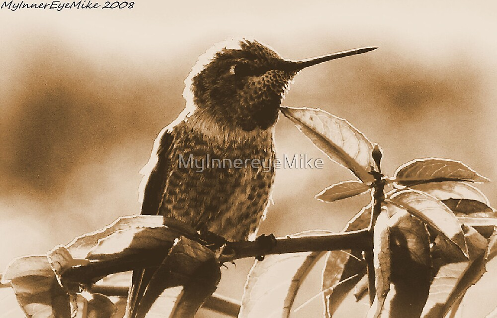 #539    Hummingbird In Sepia by MyInnereyeMike