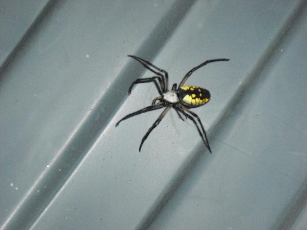 Garden spider by Heather Moscaritolo