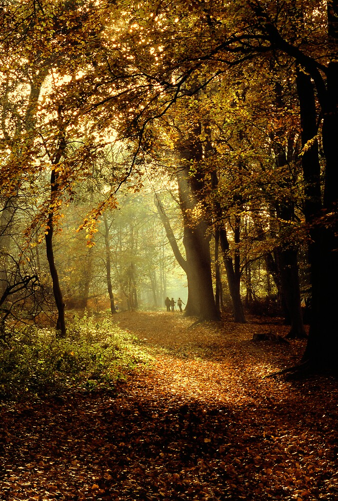 a walk in the woods by dannybeath