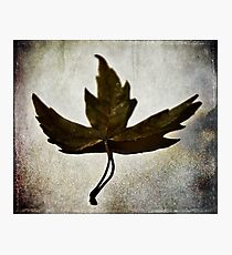 Leaf #1 Photographic Print