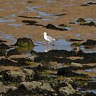 Beaumaris Beach, Anglesey North Wales UK by AnnDixon