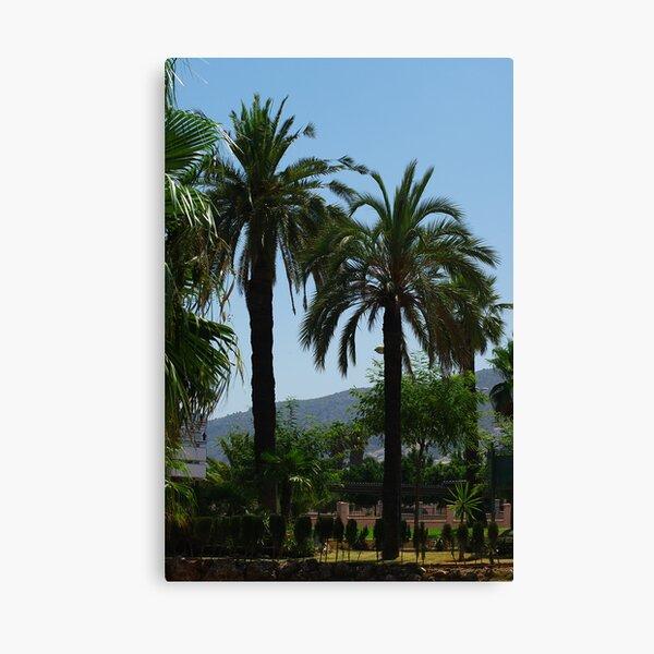 Big  Palms Canvas Print