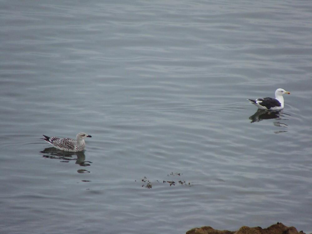 Gulls! by pedanticnerd